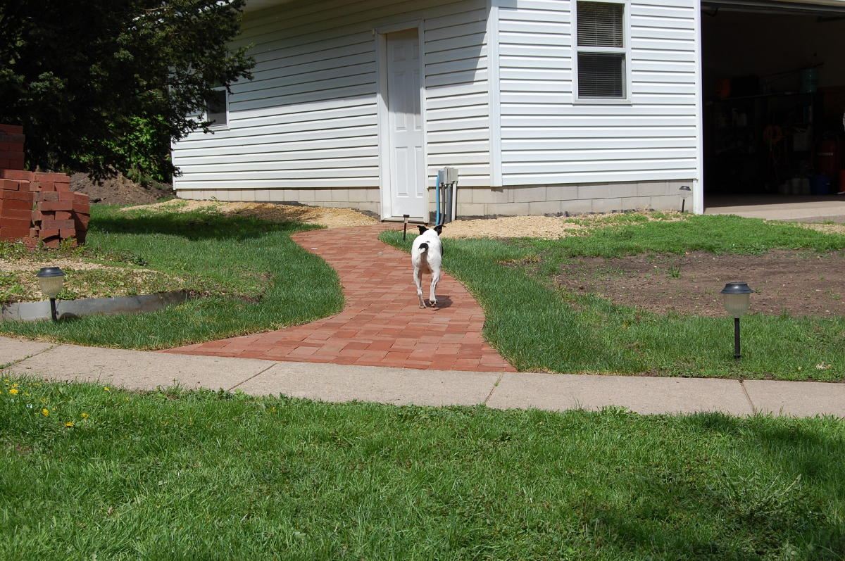 Clay recycled pavers provided by home owner installed as herringbone pattern.